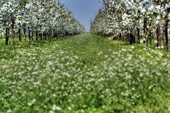Blühende Reihe stockfotos