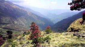 Blühende Rhododendren in den Bergen von Nepal stock video footage