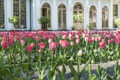 Blühende rote Tulpen im Park gegen das Gebäude Lizenzfreie Stockfotos