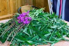 Blühende Sallyblätter und Blumen - Rohstoffe für die Herstellung traditionellen russischen Koporsky-Tees alias Ivan Tea stockbilder