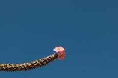 Blühende schöne Berg mit acht konkurrieren der Unsterbliche farbige Blumen Stockbilder