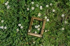 Blühende schöne Blumen im Holzrahmen Stockbilder