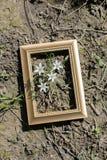 Blühende schöne Blumen im Holzrahmen Lizenzfreie Stockbilder