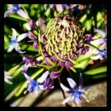 Blühende Schönheit Lizenzfreie Stockbilder