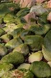 Blühende Steine am Frühling Lizenzfreies Stockbild