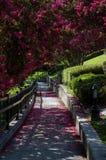 Blühende Sträuche auf dem Riverwalk in Augusta Georgia stockfotos