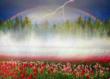 Blühende Tulpen Stockfotos