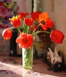 Blühende Tulpennahaufnahme Lizenzfreie Stockfotografie