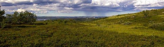 Blühende Tundra des Panoramas Lizenzfreie Stockfotografie