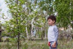 Blühende Vogelkirsche Kinderschnüffelns stockfoto