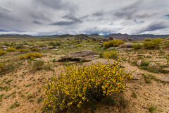 Blühende Wüste mit Wolken Arizona, Vereinigte Staaten, Lizenzfreie Stockfotos
