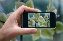 Blühende weiße Orchidee rufen Sie in der Hand den Mann an, der Blumenfotos von Ihrem Telefon, den Selbst fotografiert und am Tele Stockfoto