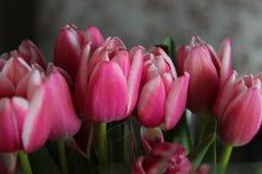 Blühende Weichheit Stockfoto