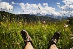 Blühende Wiese in den Dolomit Stockfoto
