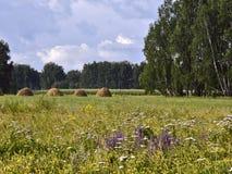 Blühende Wiese mit Bäumen und Heuschobern lizenzfreie stockbilder