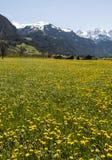 Blühende Wiesen in der Schweiz Stockbild