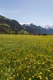 Blühende Wiesen in der Schweiz Lizenzfreies Stockfoto