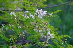 Blühende wilde Blumen Stockfotografie