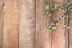 Blühende Zweige auf einer Holztisch-Draufsicht stockfoto