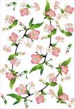 Blühende Zweige der Apfelbäume Stockfotos