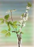 Blühende Zweige des Frühlinges lizenzfreie stockfotos