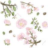 Blühende Zweige und Nüsse der Mandelvektorillustration Rosa, grüne, goldene, braune Farben Nahtloses Muster vektor abbildung