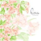 Blühender Apfelbaum auf einem weißen Hintergrund Stockbilder