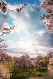Blühender Apfelgarten des Frühlinges mit Himmel und Sonne Stockbild