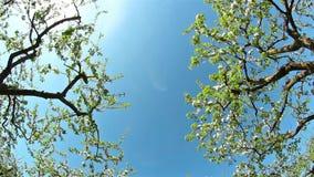 Blühender Apfelgarten, schießender Schieber