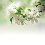 Blühender Baum Stockfotografie