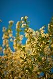 Blühender Baum Lizenzfreies Stockfoto