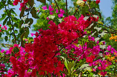 Blühender Baum Lizenzfreie Stockfotos