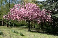 Blühender Baum lizenzfreie stockbilder