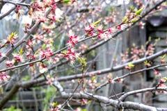 blühender Baum Stockbild