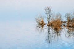 blühender Baum Baum-Holz, das im Wasser während einer Frühlings-Flut steht stockfotos
