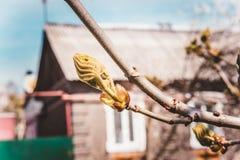 Blühender Baum des Frühlinges Lizenzfreie Stockbilder