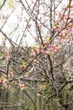 Blühender Baum des Frühlinges Stockfotografie