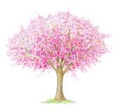 Blühender Baum des Frühlinges lokalisiert auf Weiß Lizenzfreie Stockbilder
