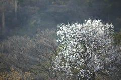 Blühender Baum des Frühlinges mit einer malerischen Ansicht des Dorfs in den Bergen lizenzfreie stockbilder