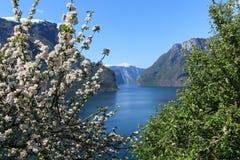 Blühender Baum durch den Fjord. Stockfoto