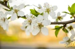 Blühender Baum im Frühjahr Stock Abbildung