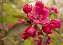 Blühender Baum im Frühjahr im Park stockbilder