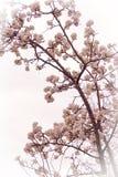 Blühender Baum im Vorfrühling lizenzfreie stockbilder