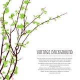 Blühender Baumbrunch 2 Stockbild