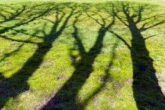 Blühender Baumschatten auf Grasgrün-Ökologieentwicklungskonzept Lizenzfreie Stockbilder