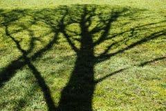 Blühender Baumschatten auf Grasgrün-Entwicklungskonzept Stockfotografie