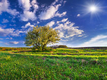 Blühender Birnenbaum im Frühjahr Lizenzfreie Stockfotos