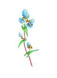 Blühender Buchweizen mit reifen Körnern Stockbild