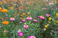 Blühender bunter Blumenhintergrund Stockfoto