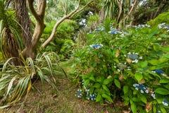 Blühender Busch in einem botanischen Garten in Normandie lizenzfreies stockbild
